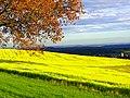 Gold - panoramio (8).jpg