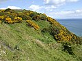 Gorse-covered hilltop - geograph.org.uk - 433504.jpg