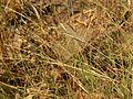 Grass (423950375).jpg