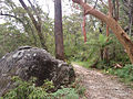 Great North Walk, Berowra Trail (13813336955).jpg