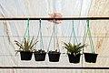 Greenhouses in qom عکس های گلخانه دنیای خار در روستای مبارک آباد قم 15.jpg