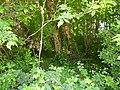 Greenwood forest farming 16.JPG