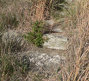 National Register of Historic Places listings in Gregory County, South Dakota - Image: Gregory Buttes steps (Gregory SD) detail 1