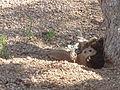 Ground squirrel83.jpg