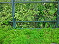HK CWB 火龍徑 Fire Dragon Path green plants Apr-2014 ZR2.JPG