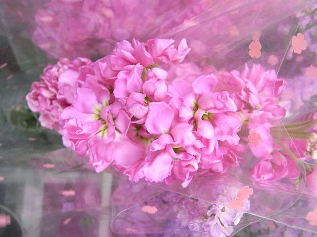 File:HK CWB Victoria Park Chinese New Year Flower Fair F03.jpg ...