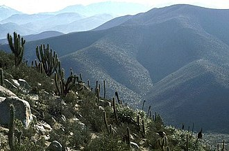 Chinchilla - Chinchilla habitat in the Andes mountains of Chile