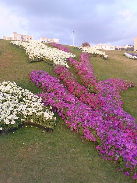 File:Haifa International Flower Exhibition P1130957.JPG