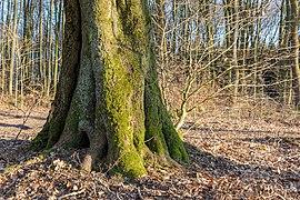 Haltern am See, Naturpark Hohe Mark -- 2018 -- 1308.jpg