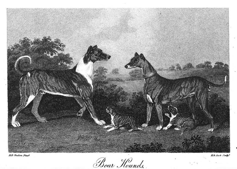 File:Hannibal and Princess, Doggen Hessen-Kassel, Boar Hounds, 1807 Chalons.xcf