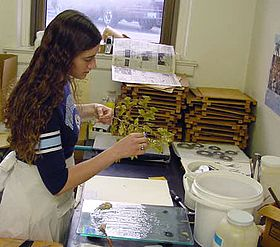 fotografi av en botaniker som förbereder växtprover för herbariet