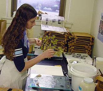 Botany - A botanist preparing a plant specimen for mounting in the herbarium