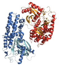 Hexokinase 3O08 structure.png