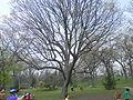 High Park, Toronto - Laslovarga (8).JPG