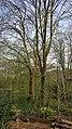 Highgate Wood 20170330 150939 (49401035037).jpg