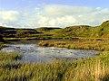 Hilltop Bog Pond - geograph.org.uk - 15014.jpg