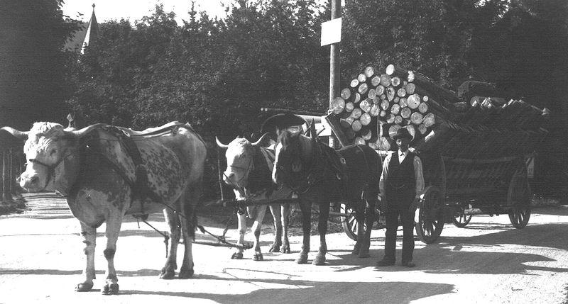 File:Holzwagen um 1924.jpg