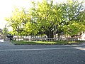 Hongan-ji National Treasure World heritage Kyoto 国宝・世界遺産 本願寺 京都185.JPG