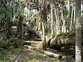 Hontoon Island State Park fallen02.jpg