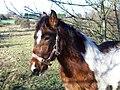 Horse (5339132239).jpg