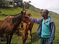 Horses in Goma DRC.jpg