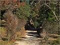Horto Florestal, Campos do Jordão. - panoramio.jpg