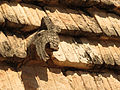 House of the Birds Roof Decoration (16744055181).jpg