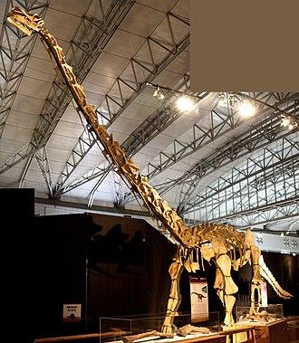 Huabeisaurus - Mounted skeleton in Japan