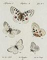 Huebner Tafel aus Sammlung Schmetterlinge.jpg