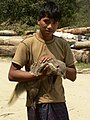 Hunting Crab-eating Mongoose 09.jpg