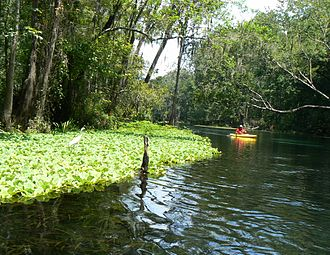 Ichetucknee River - Ichetucknee River at Ichetucknee Springs State Park, Florida, August 2006
