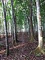 Ilaya Tree Park.jpg