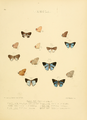 Illustrations Diurnal Lepidoptera 2 - Plate 75.png