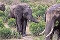 Impressions of Serengeti (136).jpg