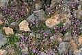 Islandstimjan0229 - Flickr - Ragnhild & Neil Crawford.jpg