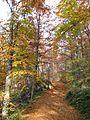 Jablanik - zapadna Srbija - mesto Debelo brdo - Na putu ka vrhu Jablanika - Bukova šuma u jesen 3.jpg