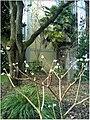January Frost Botanic Garden Freiburg Papierbusch - Master Botany Photography 2014 - panoramio.jpg