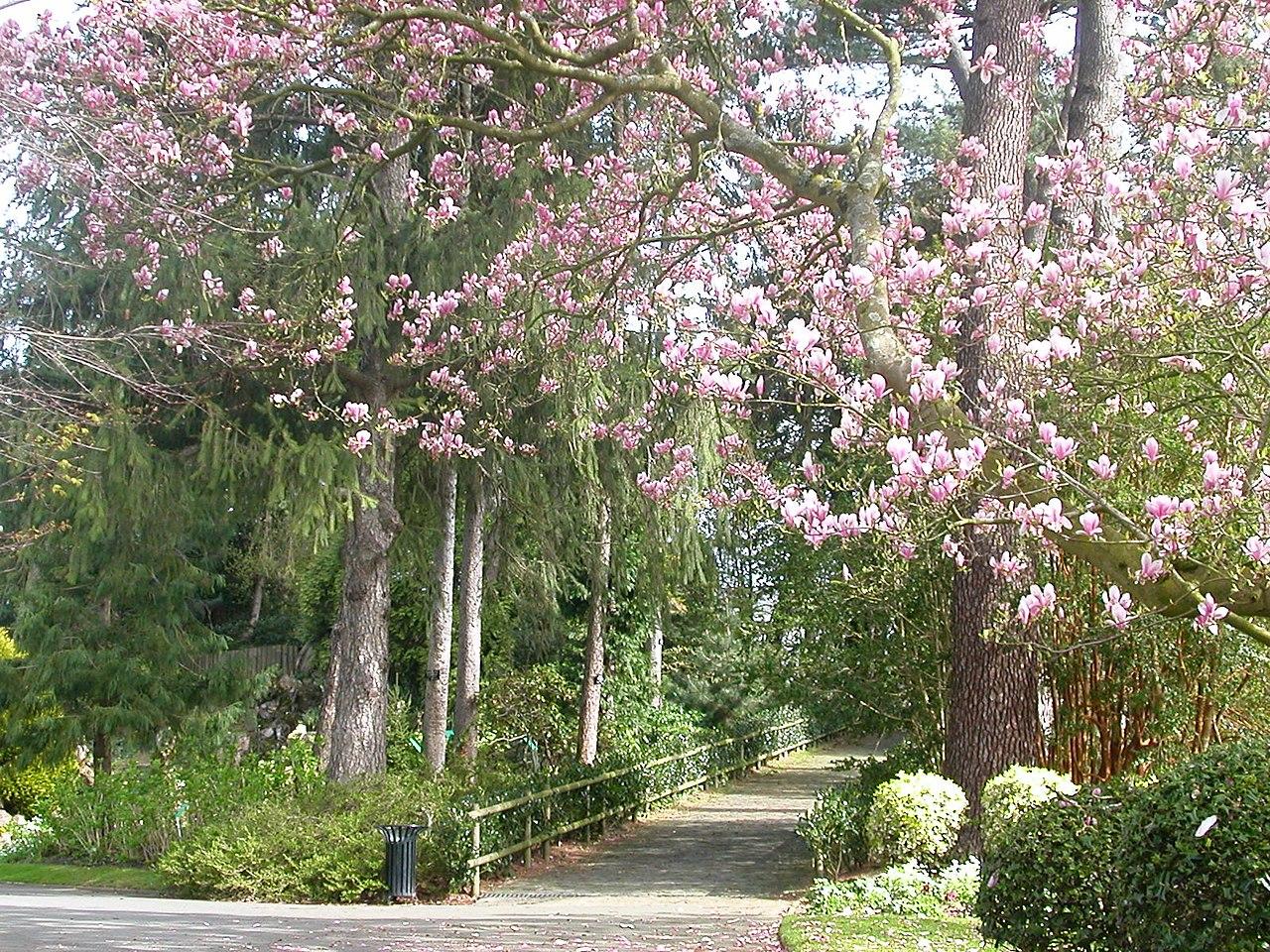 File jardin des plantes nantes wikimedia for Jardin des plante