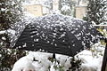 Jerusalem Snow Umbrella 2013 -1 (8366054713).jpg