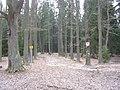 Kačležský rybník, cesta.jpg