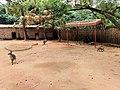Kangaroos at Shenzhen Zoo.jpg