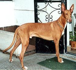 ägyptischer Hundegott