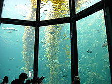 Photo of 50 foot-tall yellow plants in water behind glass wall divided into sections.
