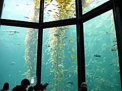Fishkeeping - Wikipedia