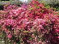 Keukenhof Garden (32).JPG