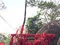 Khao Khitchakut National Park05.jpg