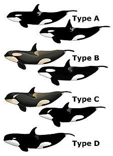 Πόσο μεγάλο είναι το πέος μπλε φάλαινα δωρεάν πορνό βίντεο της Milf