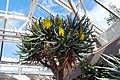 Kirstenbosch-002.jpg