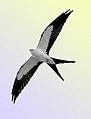 Kite-1a.jpg