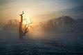 Kogut o wschodzie słońca.jpg